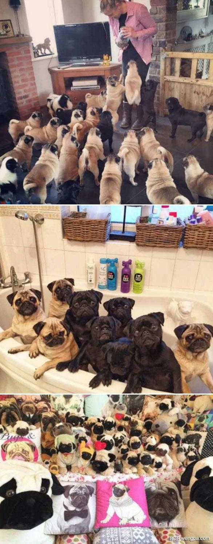 养30条狗狗是什么体验 狗狗萌宠图片 - 嗡啪网