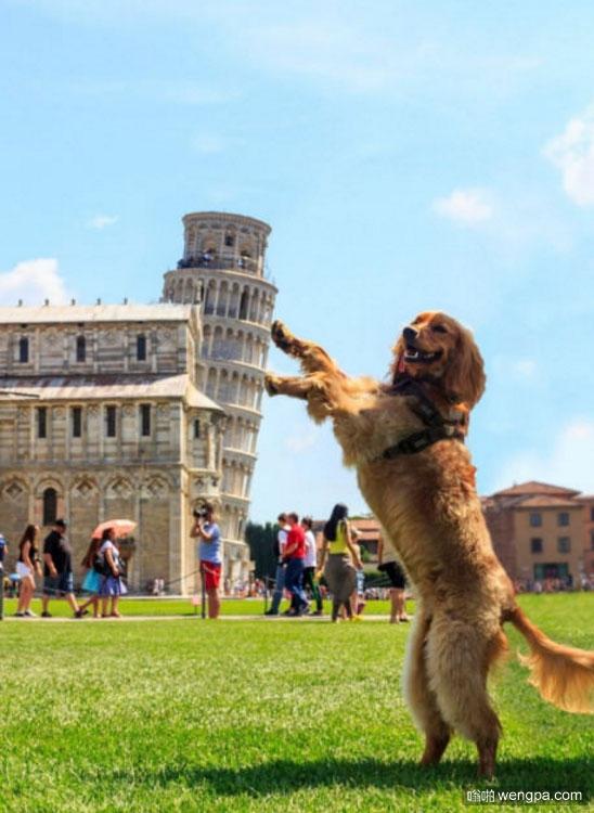 狗狗与比萨斜塔合影 狗狗搞笑图片 - 嗡啪网