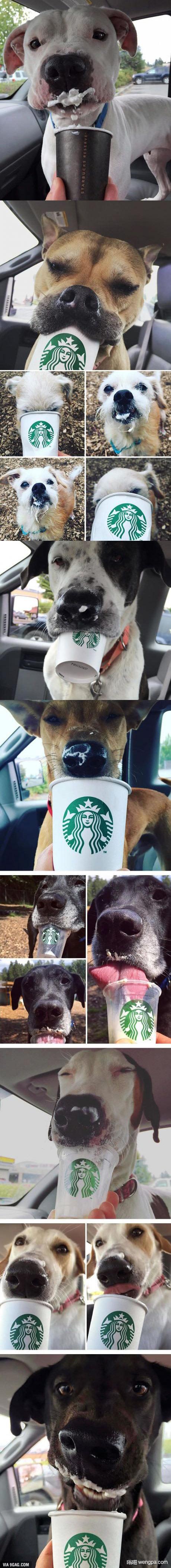 狗狗喜欢星巴克 不信让你家狗狗试试