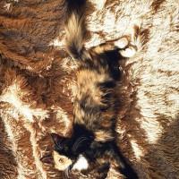 一只叫Elizabeth的可爱猫咪 有两副面孔呢~~~萌翻了!(5)
