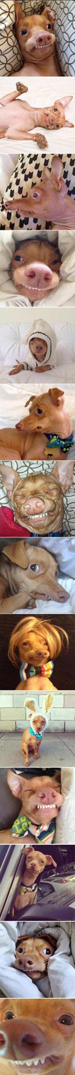 龅牙狗狗表情包大全