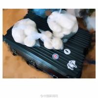 网友打开年后返程行李箱笑哭!大米馒头应有尽有(8)