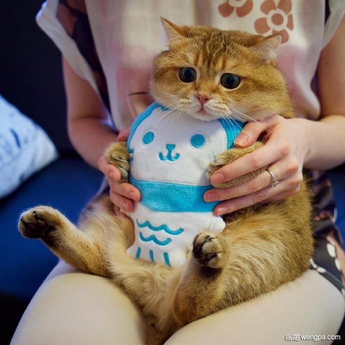 绿眼睛橘皮胖猫就喜欢吃和睡 主人很无奈