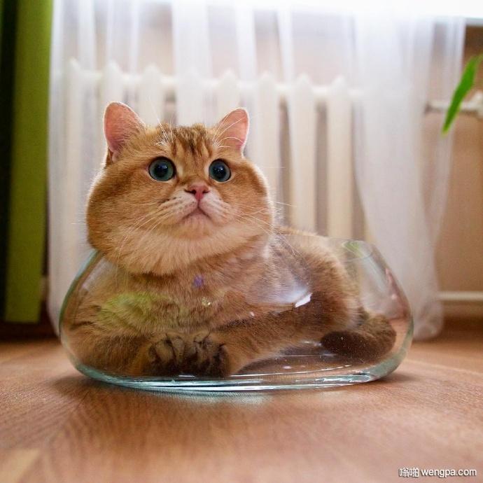 绿眼睛橘皮胖猫就喜欢吃和睡 主人很无奈(7)