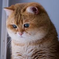 绿眼睛橘皮胖猫就喜欢吃和睡 主人很无奈(5)