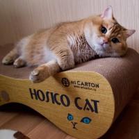 绿眼睛橘皮胖猫就喜欢吃和睡 主人很无奈(1)