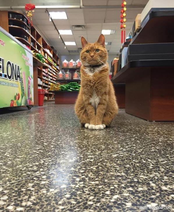 超市的小猫咪学会迎客了