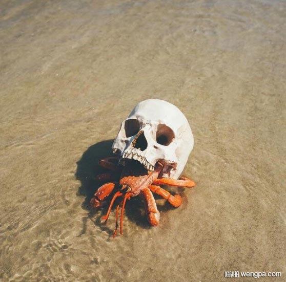 寄居蟹用骷髅作壳