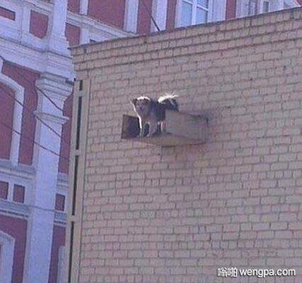 发现一只被困住在墙上 绝望的二汪