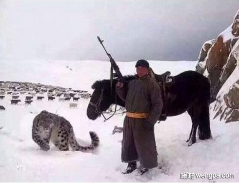 你可能会认为你很酷,但你永远不会像Mongolian shepherd和他的AK-47以及宠物雪豹一样酷