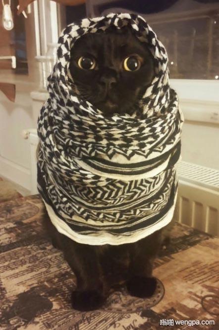 据说这是一只中东的喵星人