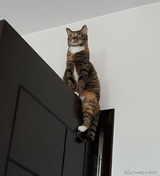 哨兵?小猫咪搞笑图片 小猫咪可爱萌宠图片 - 嗡啪网