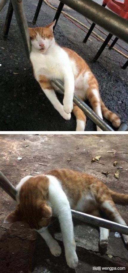 去大排档吃饭 一只喵醉倒了 小猫搞笑图片 - 嗡啪网