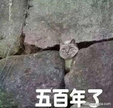 猫咪绝望的眼神