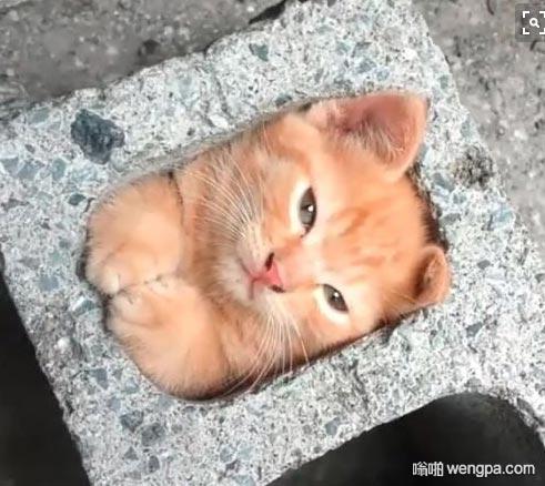 【小猫咪可爱图片】猫是液体 小猫咪萌宠图片 - 嗡啪网