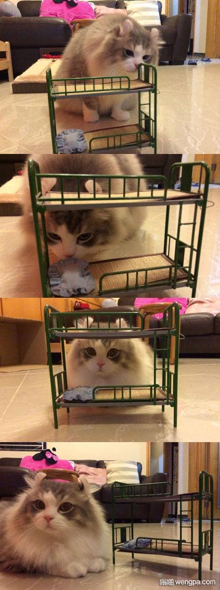 主人在网上给猫咪买了一张小床 结果没注意尺寸 … 