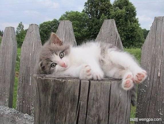 累了 就休息一下 小猫咪萌宠图片 - 嗡啪网