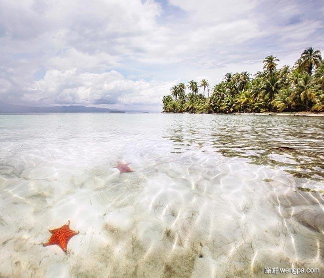 圣布拉斯群岛清澈海水中红色的海星