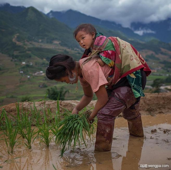 苗族妇女背着孩子在田间插秧