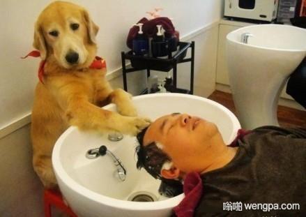 狗狗洗头房洗头赚生活费