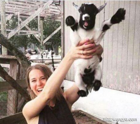 谁更开心 美女抱小羊可爱图片 - 嗡啪网