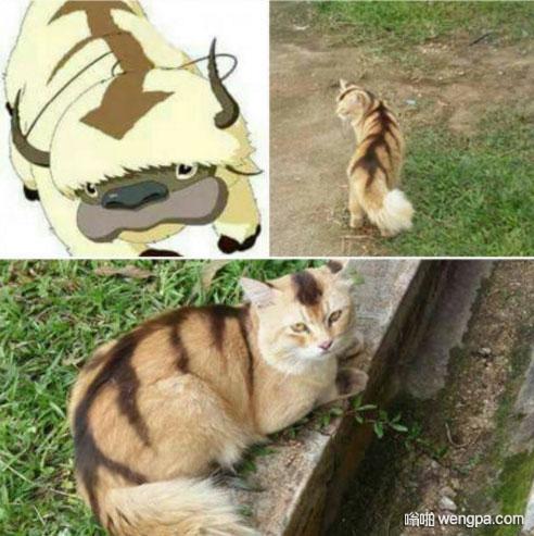 Appa 它是真实的!小猫cos Appa - 嗡啪网