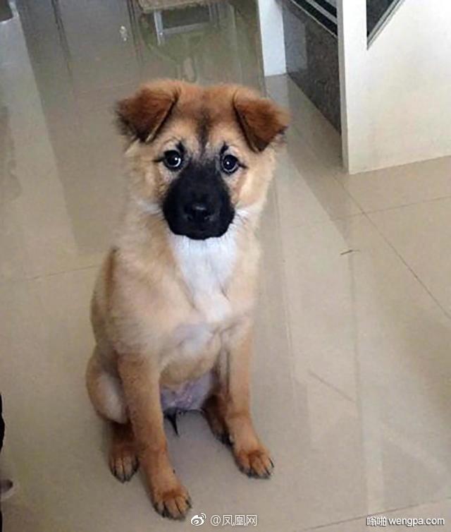 英国人带狗在中国宠物店剃毛 语言不通狗狗下场很惨