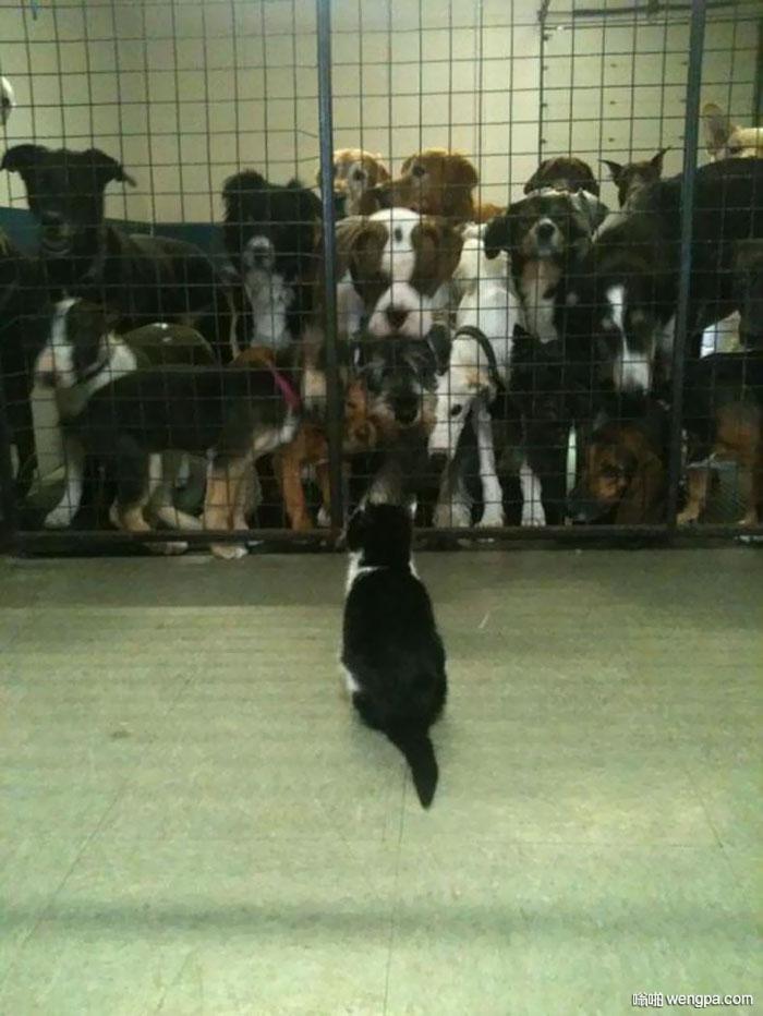 我在一个动物避难所工作 在一旁有一个开放的网格窗口 每天这只猫都在这嘲笑狗