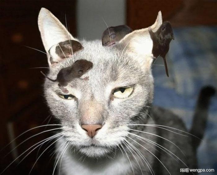 这一定是只母猫 几只老鼠幼崽爬在猫的头上 - 嗡啪网