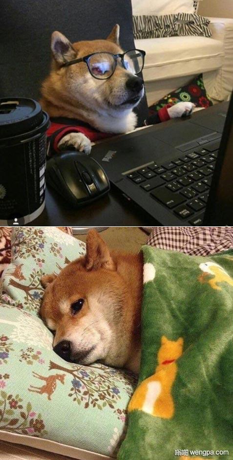 每天的两种状态 单身狗 - 嗡啪网