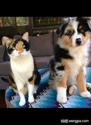 我的兄弟来自另一个妈妈 猫和狗搞笑图片 - 嗡啪网