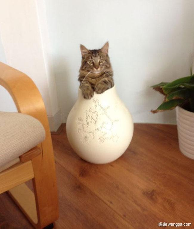 这猫以为自己是花儿