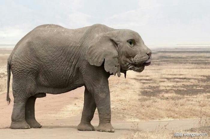 你会给这个动物起什么名字