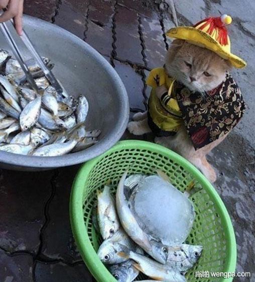 """""""小皇帝""""去街上视察民情 走到鱼摊前却怎么也走不动了"""
