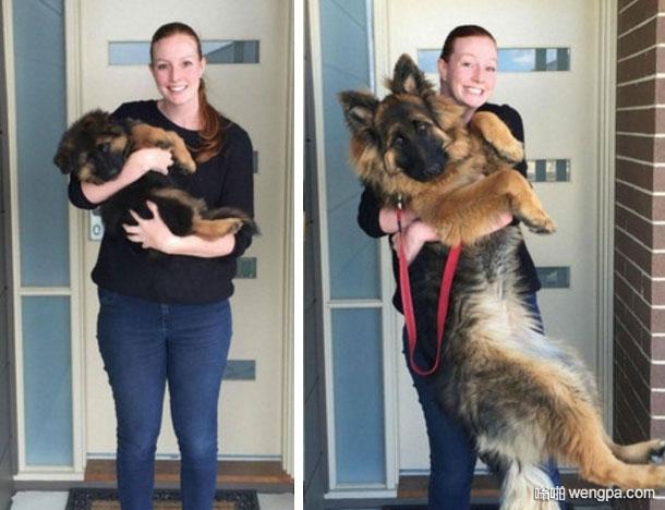 女主人每个月都抱爱犬合照  8个月大后抱不动了
