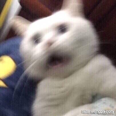 """一对小情侣在吵架,男生崩溃大哭:""""你根本就不爱我!你和我在一起只是为了撸我的猫!!!"""""""