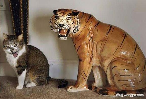 喵:我比它还凶 猫和老虎搞笑图片 - 嗡啪网