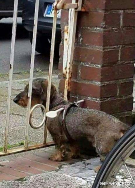 防止狗狗跑出去