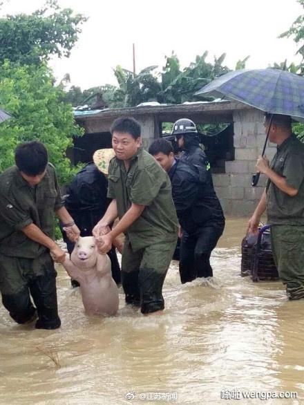 洪水中获救后 二师兄表情亮了