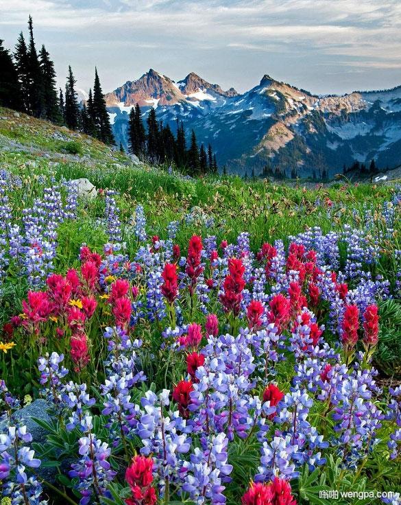 雷尼尔山国家公园 华盛顿,美国
