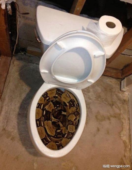 你家马桶有点脏了 蟒蛇马桶搞笑图片 - 嗡啪网