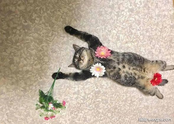 可爱小猫这个是在摆姿势拍封面么