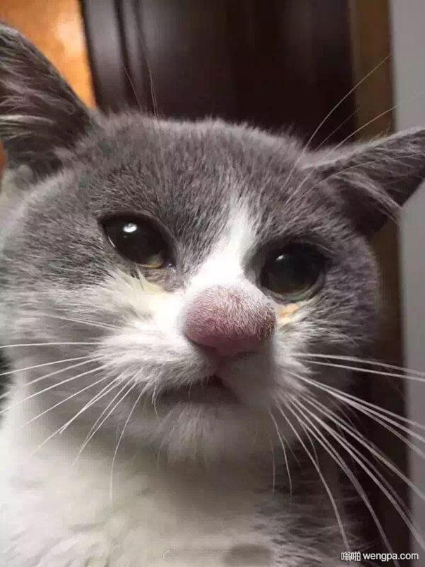 猫咪与蜜蜂相遇后 不忍直视啊哈哈(8p)