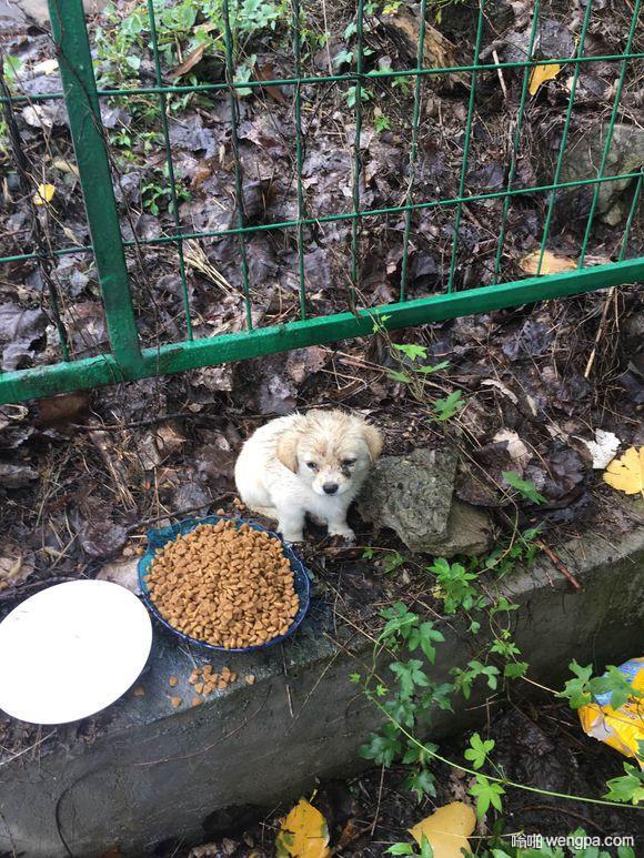 流浪小奶狗胆子特别小,遇到一盆狗粮当时就懵了