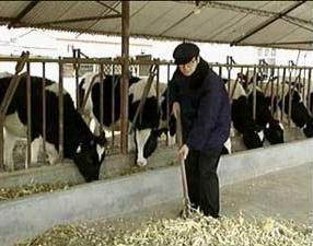 【内涵段子】这算啥啊!一对夫妇参观一个养牛场