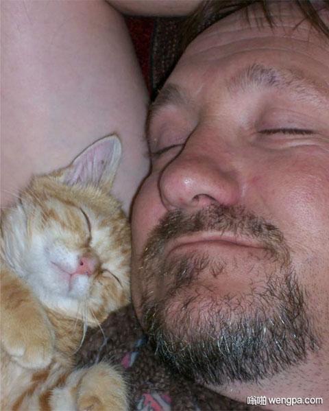 哥们曾经说非常非常讨厌猫... 萌宠图片 - 嗡啪网