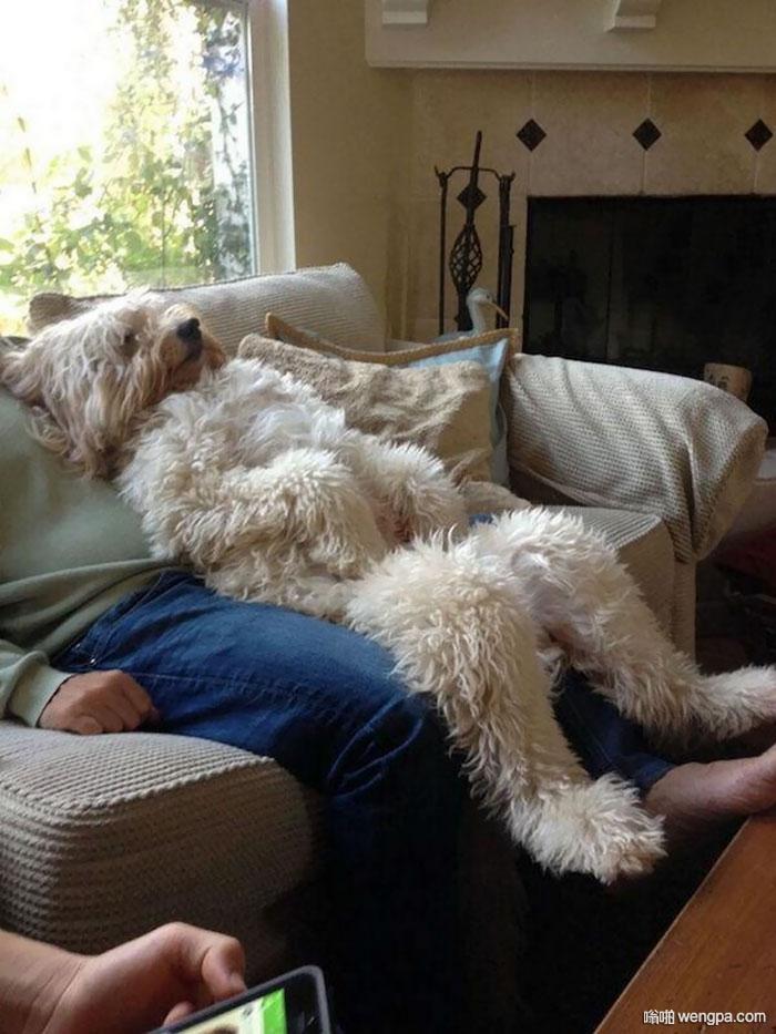 狗狗搞笑图片人模狗样
