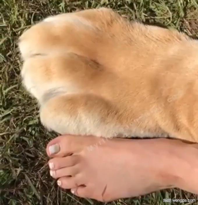 巨大的毛茸茸谋杀手套 狮子爪子 - 嗡啪网