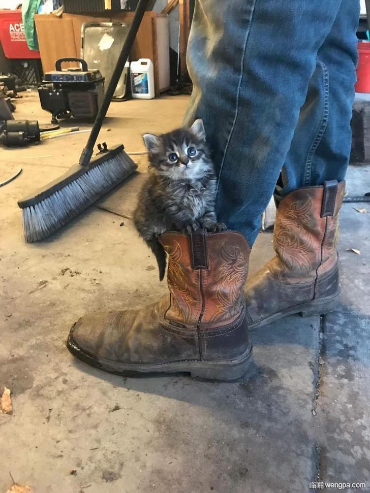 西伯利亚小猫很上镜 萌宠图片 小猫 - 嗡啪网