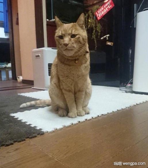 被蜜蜂蛰出了个狮子脸..的喵星人 小猫搞笑图片 - 嗡啪网